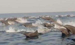 delfines, Oaxaca, mar, medio ambiente, animales, diversidad