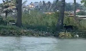 abandono, perros, canes, Veracruz, islas