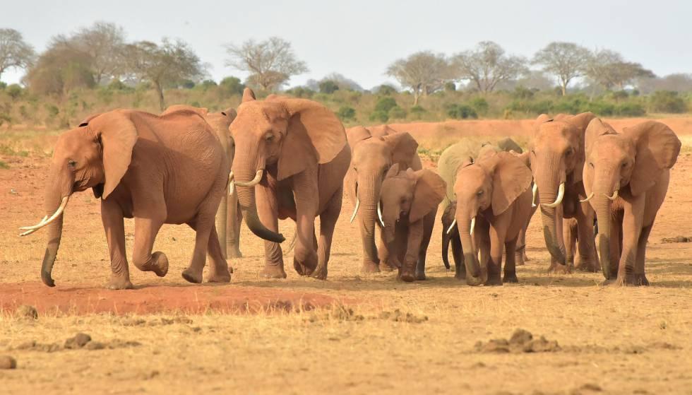 Botsuana, África, elefantes, muertes, medio ambiente