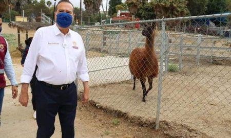 alcalde, tijuana, zoológico