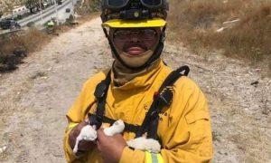 Bomberos, Tijuana, felinos, gatos, vienos de santana, mascota, adopción