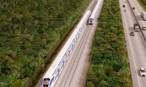 Tren Maya, árboles, deforestación, ecología, medio ambiente, proyecto, Gobierno Federal