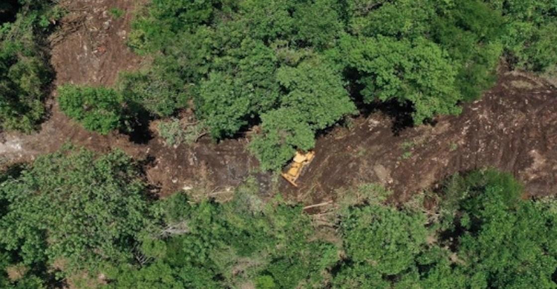 deforestación, Playa del Carmen, petición, activismo, medio ambiente