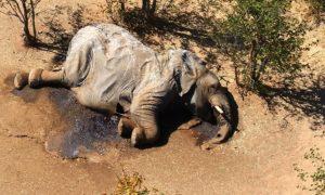 muerte, elefantes, África, medio ambiente, animal salvaje