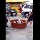 video, rescate, cachorros, Huracán Hanna, Hanna, lluvias, Tamaulipas