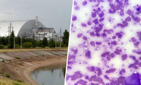 Hongo, Chernobyl, radiación, invulnerable, come, alimenta