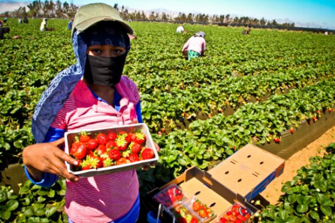 acoso, jornaleras, San Quintín, Ensenada, cultivos, agricultura, violencia contra la mujer