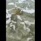 Guerrero, mantarraya, mar, animal marino, video, viral