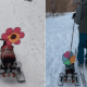 video, perrita, caminar, cachorra, nieve, video viral, mascota