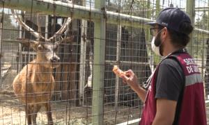 Zoológico de Tijuana, Parque Morelos, Protocolos sanitarios,