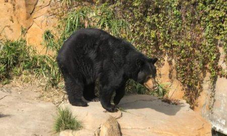 tratamientos, mantenimiento, animales, fauna, parque