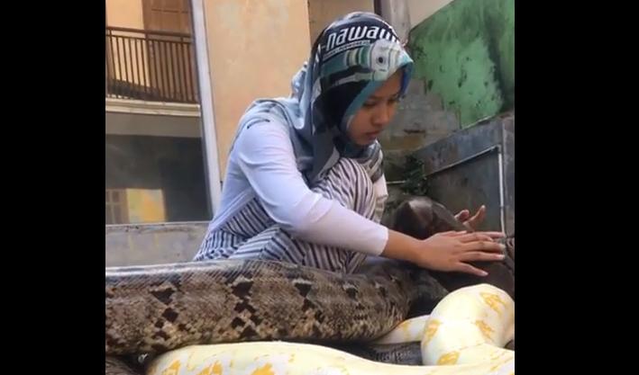 joven, mascota, pitones, serpientes, Indonesia, video viral, tendencia