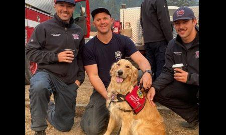 Kerith, perra, golden retriever, bomberos, California, incendios