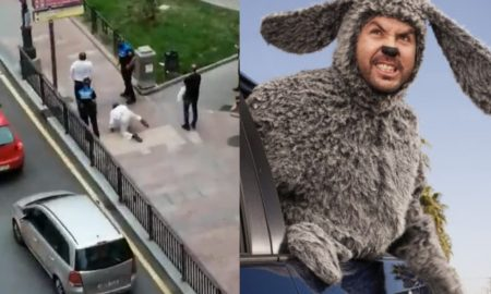 perros, multa, cubrebocas, España, lo viral, video, bizarro