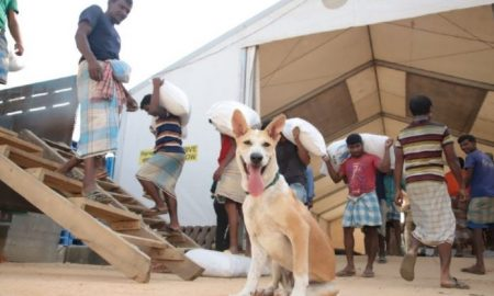 Foxtrot, perro, mascota, refugio, Bangladesh, centro