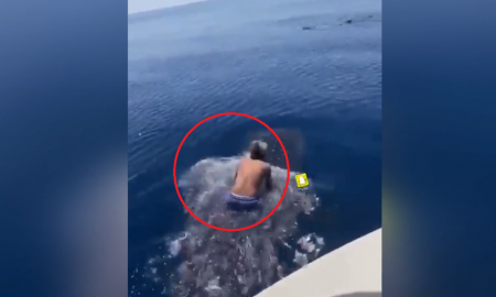 video viral, tiburón ballena, maltrato animal, montar, tiburón