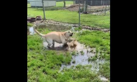 Perra, perro, ciego, charco, agua, juega, descubre, video, viral