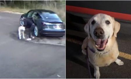 Canadá, abandono, perrito, can, video viral