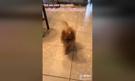 Perro, baile, salsa, Quimbara, video viral, redes, TikTok