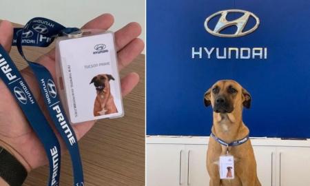 perro callejero, can, Brasil, Hyundai, agencia de autos, empresa, viral