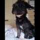 video viral, perro, cachorro, dentadura, Reino Unido