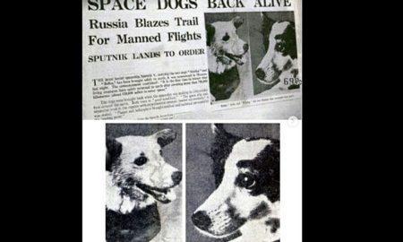 Perros, animales, espacio, viaje, regreso, vivos, Belka, Strelka