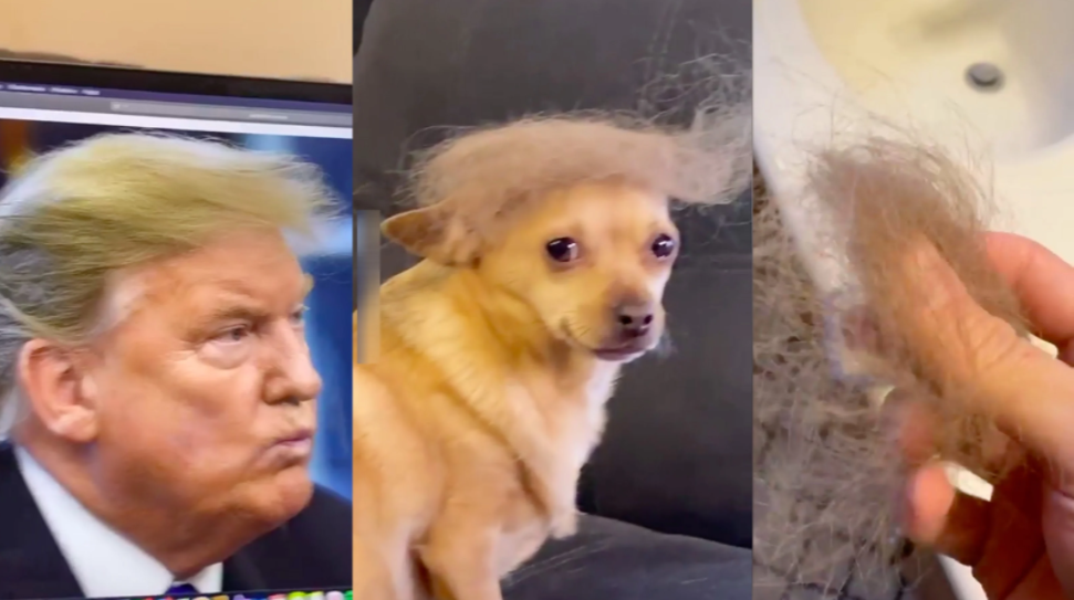 perro, Donald Trump, can, video viral, viral, chiste