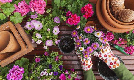 jardinería, taller, imac