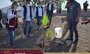 Reforestación, centro comunitario