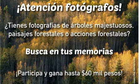 concurso, fotografía, naturaleza, centinelas