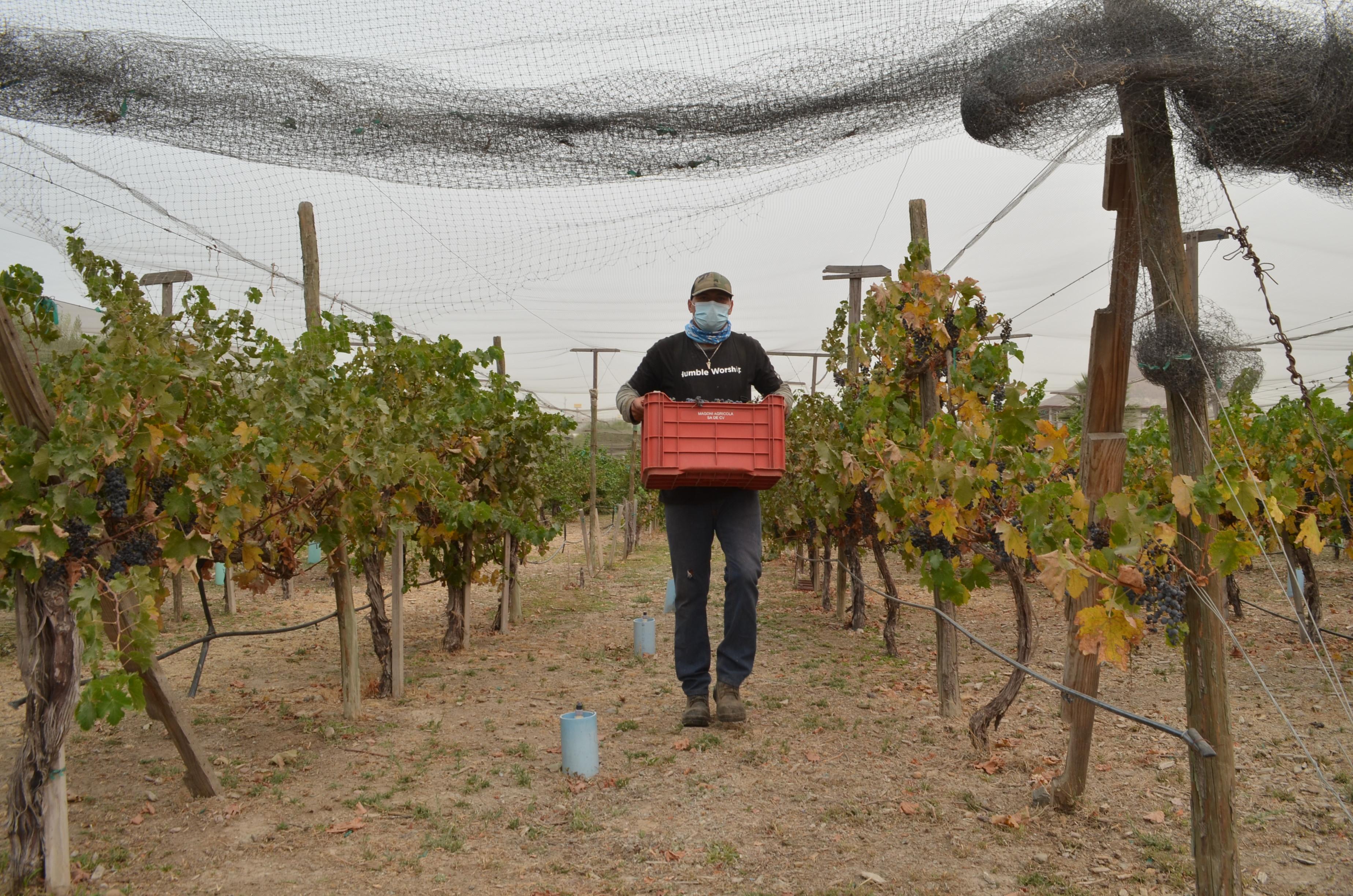 cosecha, agua, cespt, cultivo