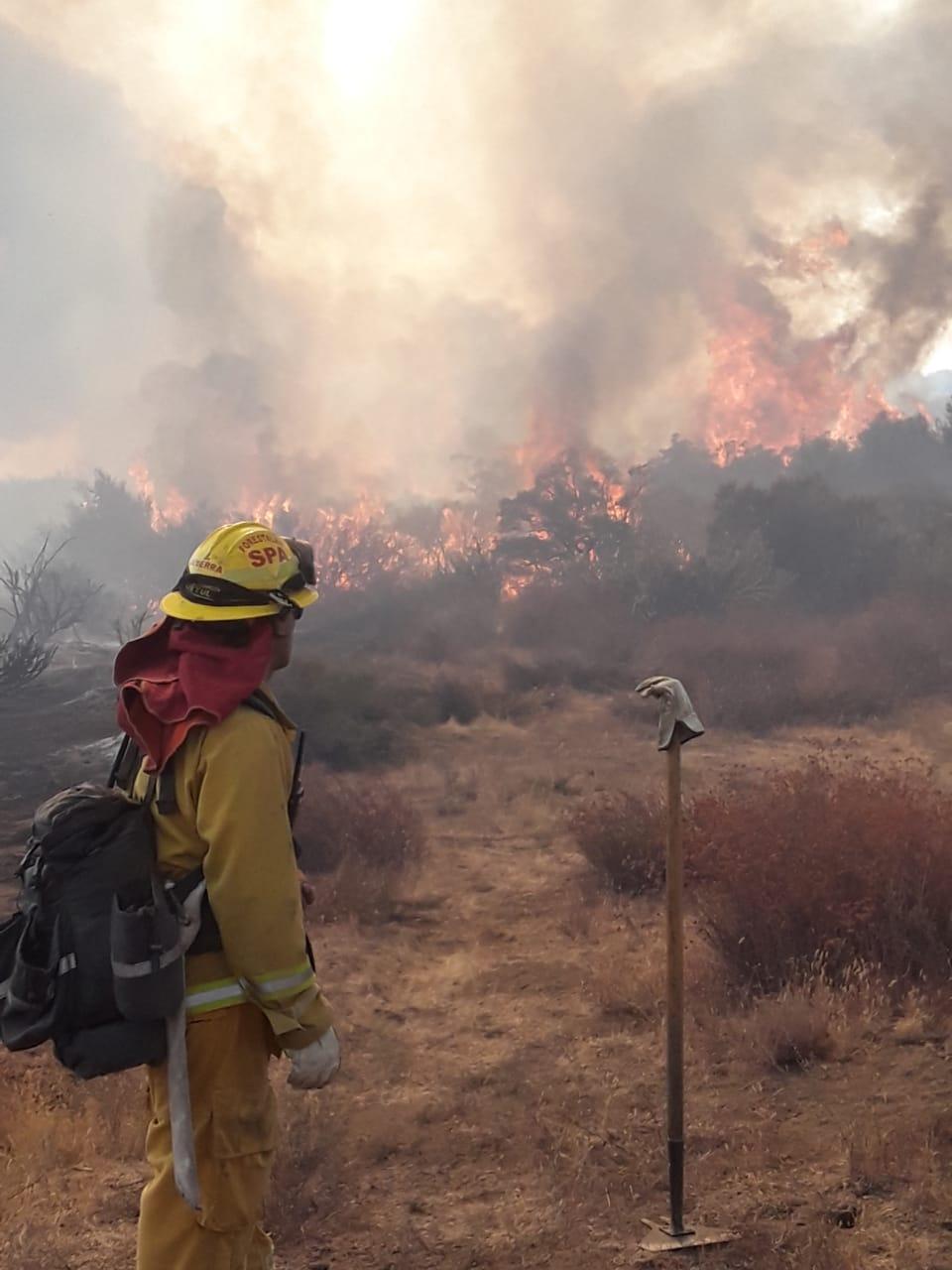 SCSA, Incendios, Tecate, árboles