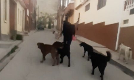 mujer, abuelo, perros callejeros, agresión, violencia, Bolivia