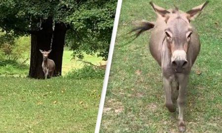 burro, emoción, animal, TikTok, video viral