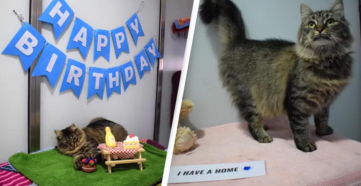 Gatita, cumpleaños, hogar, adopción, viral