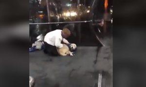 Hombre, perro, abriga, chaleco, cubre, noche, frio, video viral