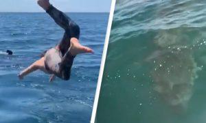 nadar, tiburón, tiburón peregrino, Oceáno Pacífico, video viral