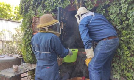 ICA, apicultura, investigación,