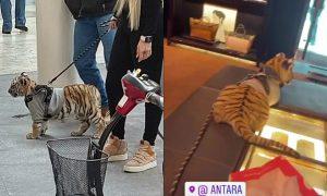 Polanco, tigre de bengala, CDMX, denuncia, animal, peligro de extinción