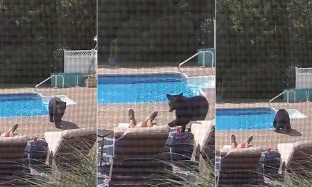 video viral, oso, casa, patio, Massachusetts, EEUU