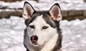 productos, intoxicación, perro, can,