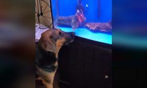 Perro, pex, pecera, pelea, pique, video viral