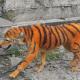 pintura, perro, can, maltrato animal, Malasia, tigre