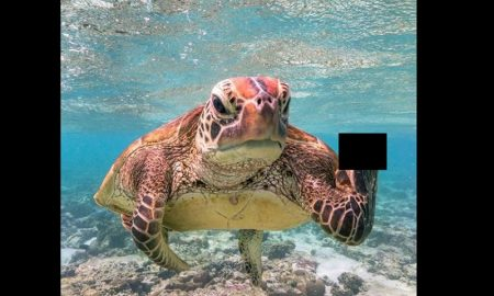 Tortuga, señal, dedo, aleta, Comedy Wildlife Photography 2020