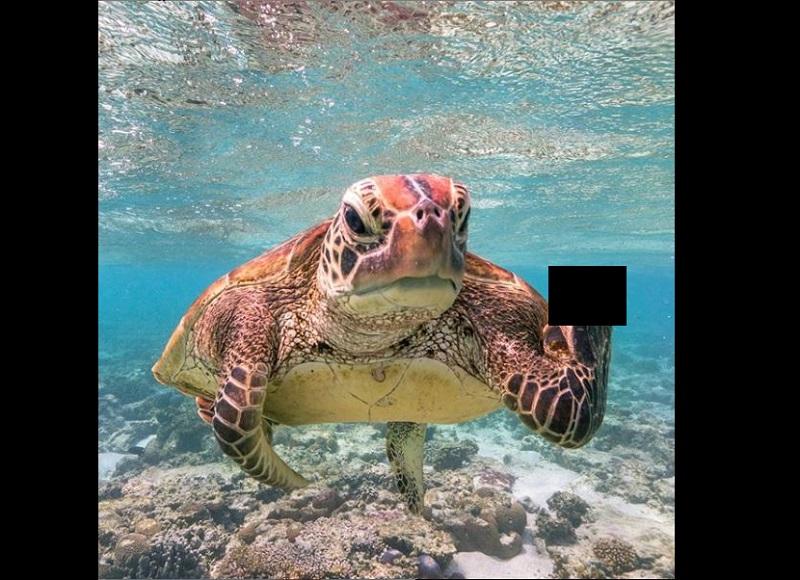 Tortuga, señal, dedo, aleta, Comedy Wildlife Photography 2020