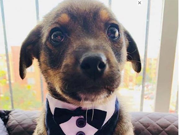 Vicente, perro, adopción refugio, plantado, viral