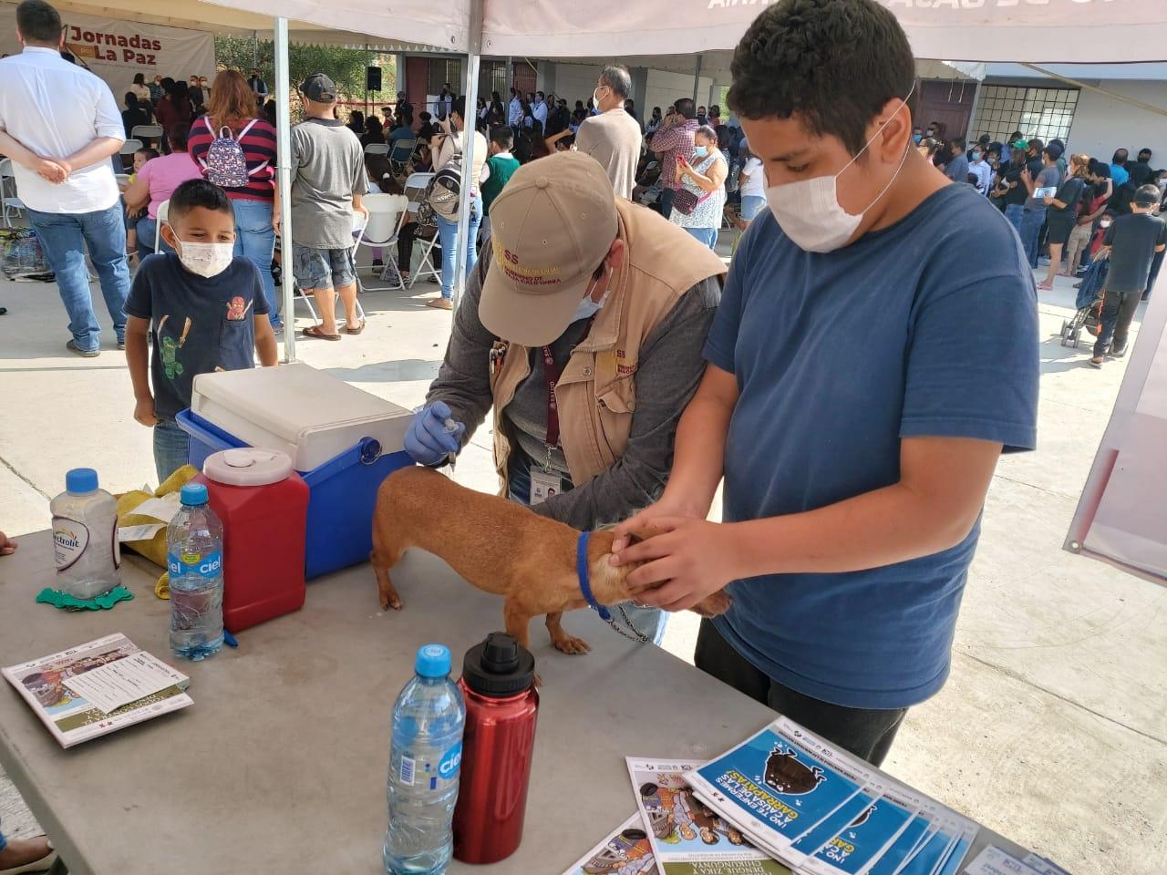 Secretaría de Salud, vacunación antirrábica, Gratuita,