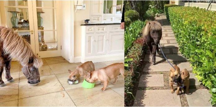 Caballos, perros, paseo