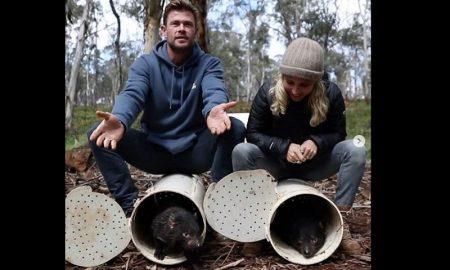 Chris Hemsworth, Elsa Pataky, Australia, demonio de tasmania, liberación