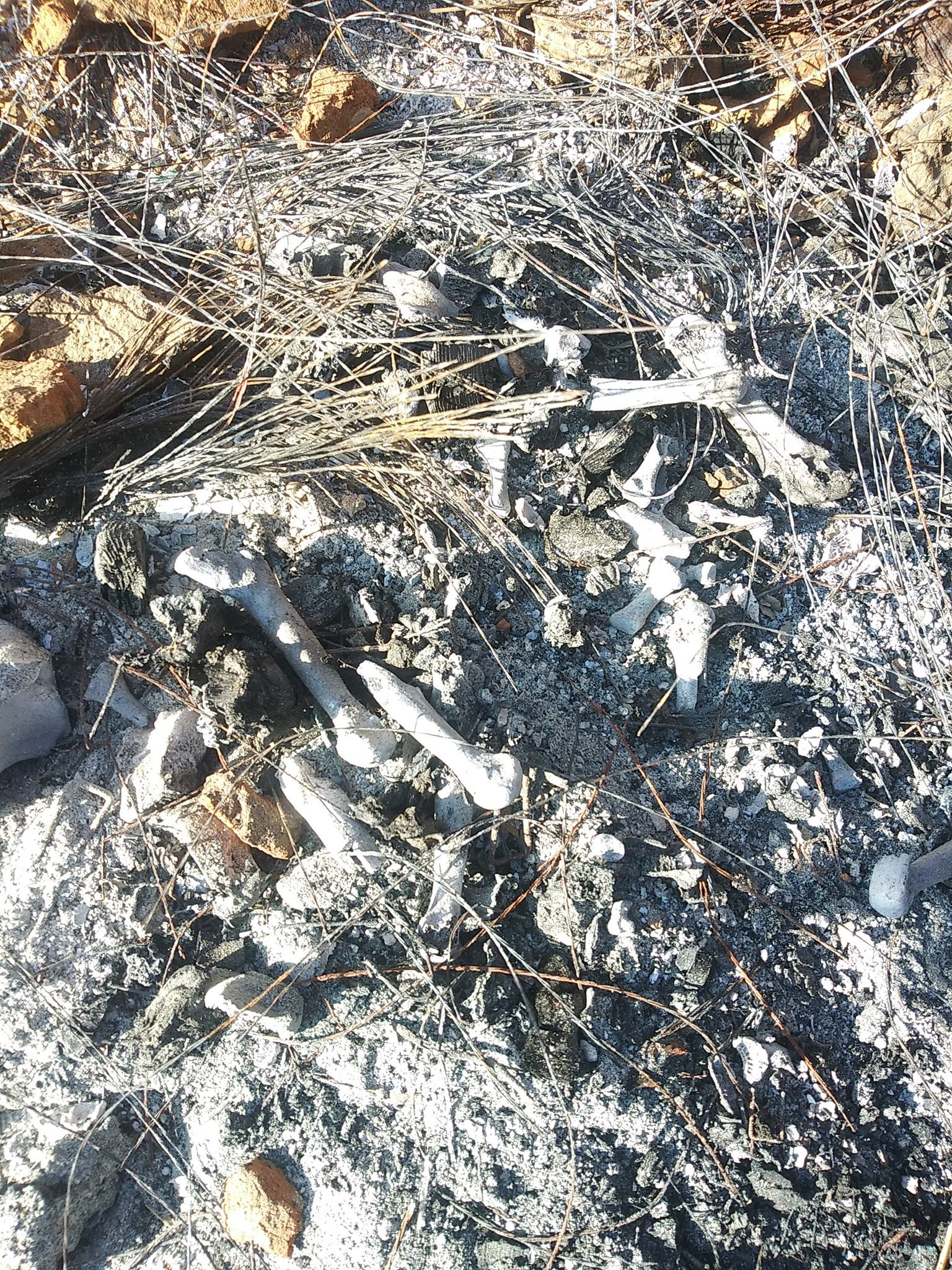 Grupos de búsqueda, Desaparecidos en Baja California, cuerpos calcinados, personas desaparecidas, búsqueda estatal, Movimiento Estatal de búsqueda de Baja California,